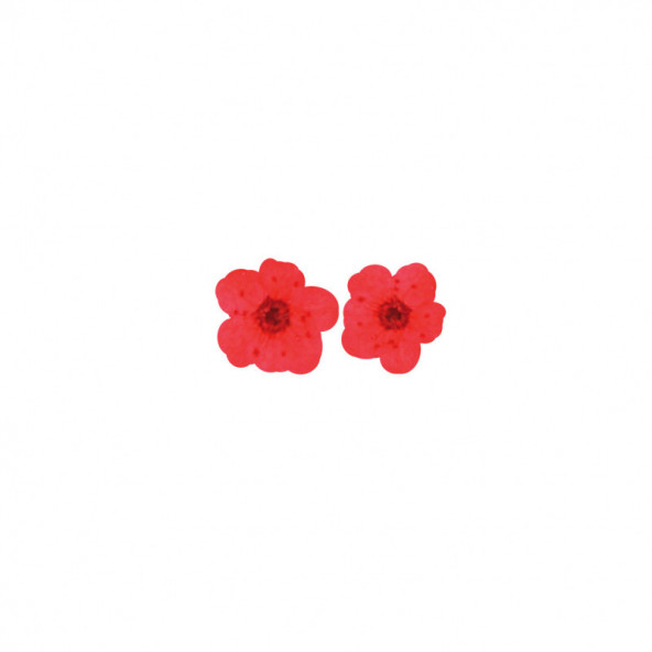 flores-naturales-secas-big-flower-red-1-by-Fantasy-Nails
