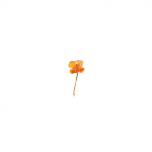 flores-naturales-secas-small-flower-naranja-1-by-Fantasy-Nails