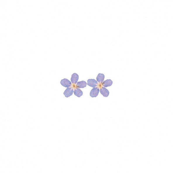 flores-naturales-secas-big-flower-azul-centro-amarillo-1-by-Fantasy-Nails