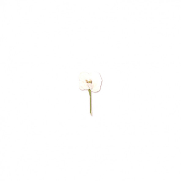 flores-naturales-secas-small-flower-blanco-1-by-Fantasy-Nails