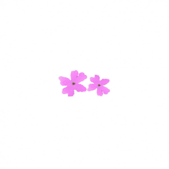 flores-naturales-secas-large-flower-rosa-1-by-Fantasy-Nails